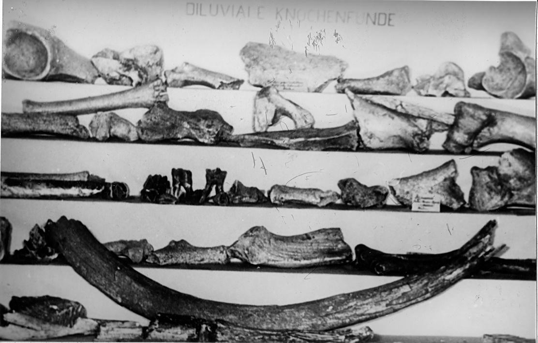 Artefakte Steedener Höhlen