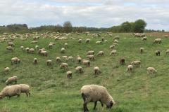 Viehweide am Kolben Holz