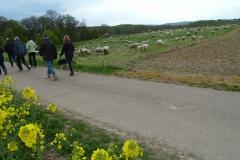 Feldweg in Richtung Kolbe-Holz-Schlucht