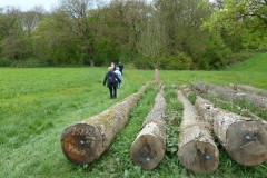 Waldweg durch die Kolbe-Holz-Schlucht