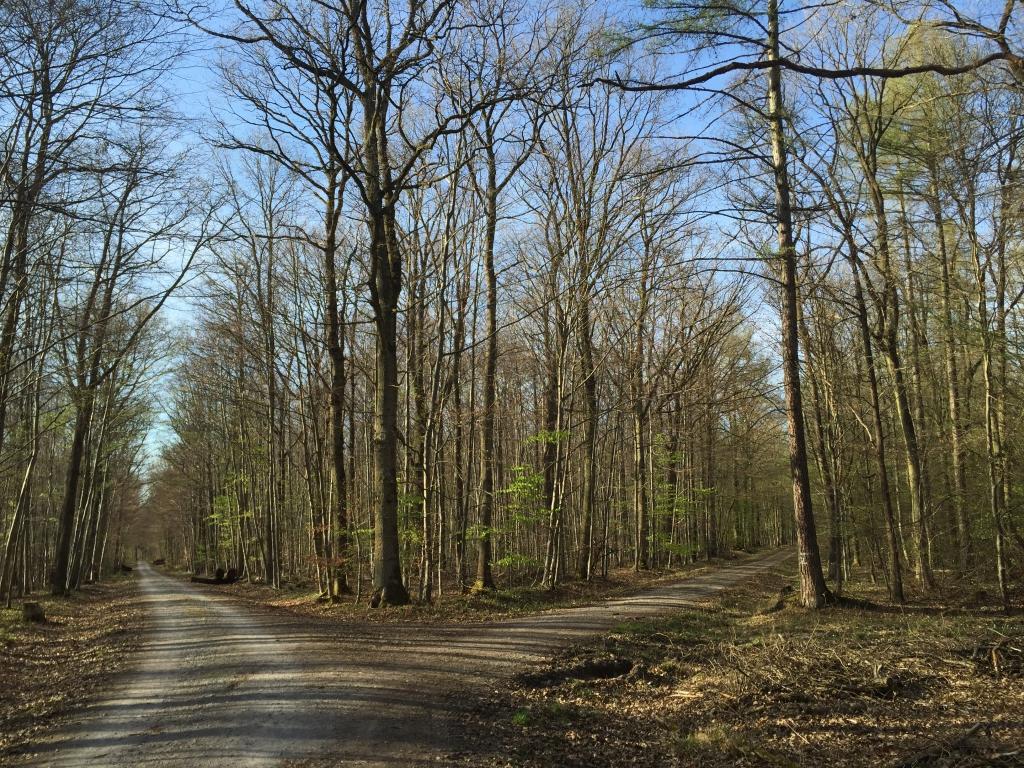 Die Wegkreuzung im Dehrner-Wald