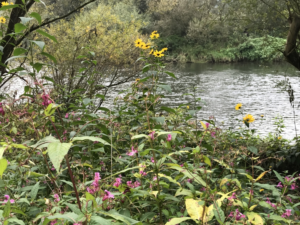Herbststimmung an der Lahn