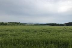 Blick vom Niedertiefenbacher Feld auf die Schotterhalden am Steinbruch Schneelsberg