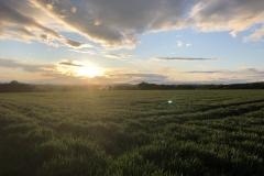 Blick über das Steedener Feld Richtung Dehrn