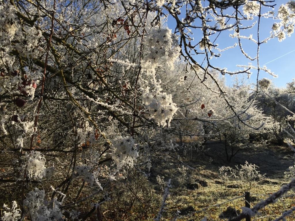 Apfelbaum am Damm des Stausees